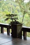 Momento di zen - Bali - Indonesia fotografia stock libera da diritti