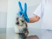 Momento divertente dopo il trattamento del coniglio malato del bambino ad una clinica veterinaria fotografie stock