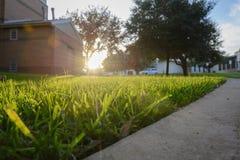 Momento do por do sol do fundo do borrão sobre o gramado Fotografia de Stock