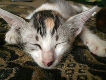 Momento dolce del gatto di sonno Fotografie Stock Libere da Diritti