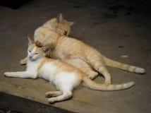 Momento engraçado entre a mãe e os felines do filho foto de stock