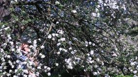 Momento sensual en huerta de cereza debajo del árbol por completo de pequeñas flores blancas Muchacha hermosa de abarcamiento her almacen de video
