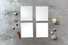 Momentopnamenmalplaatjes op rustieke houten achtergrond met rond zeeschelpen worden geschikt die Stock Foto