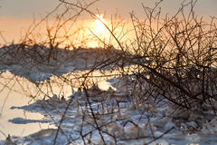 Mar muerto - Bush marchitado en el amanecer Fotos de archivo