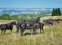 Momentos loving do cavalo Foto de Stock