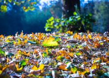 Moments of autumn stock photography