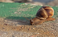 Momentum of a snail Royalty Free Stock Images