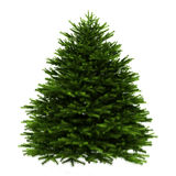 Momi fir tree isolated on white. Background Royalty Free Stock Photos
