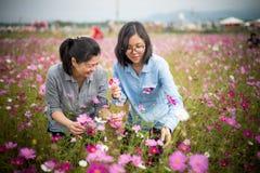 Momia atractiva e hija de moda que seleccionan las flores en el parque abierto Imagenes de archivo