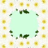 Momia blanca, frontera de la flor del crisantemo aislada en fondo verde de la menta Ilustración del vector Imagen de archivo
