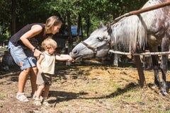 Momia con el caballo de dos años de la alimentación del niño Fotos de archivo libres de regalías