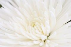 Momia de Fuji Imagenes de archivo