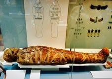 Momia egipcia en British Museum en Londres Foto de archivo libre de regalías