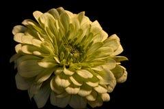 Momia verde clara Fotografía de archivo