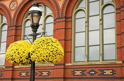 Momias colgantes amarillas Foto de archivo