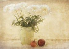 Momias y manzanas Imagen de archivo libre de regalías