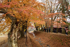 Momiji走廊, Kawaguchiko,日本 免版税库存图片