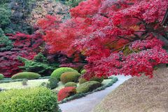 Momiji Японии Стоковое фото RF
