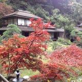 Momiji i Japan Arkivfoton