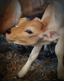 Mommas牛奶 库存照片