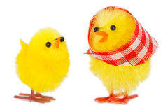 Mommy chick and baby chick. Isolated on white background Stock Photography