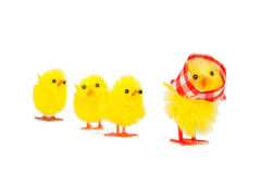 Mommy chick and three babies following Stock Photo