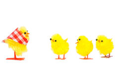 Mommy chick and three babies listening Stock Images