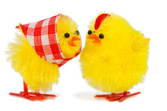 Mommy and daddy chick. Isolated on white background Stock Image