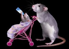 Mommy rat with baby. A mother rat is pushing her baby in a stroller while the baby is drinking milk from a bottle