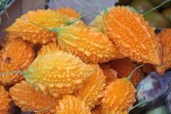 Momordica εξωτικός καρπός φυτό τροπικό Ώριμο πικρό πεπόνι στοκ φωτογραφία