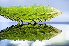Momordica Charantia Sour cucumber Stock Photo