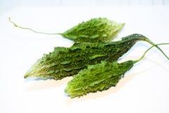 Momordica Charantia Sour cucumber Stock Images