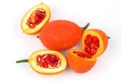 Momordica cochinchinensis, Azji Południowo Wschodniej owoc odizolowywa na bielu Obraz Royalty Free