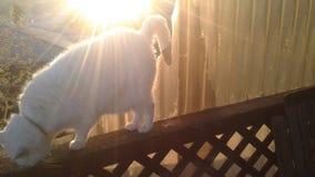 Mon ange de chat et le coucher du soleil photos stock