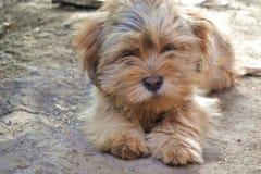 MON ANIMAL FAMILIER Image libre de droits