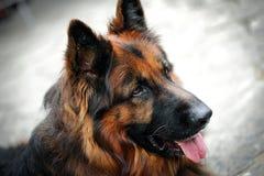 Mon animal familier aimé Image libre de droits