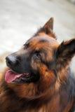 Mon animal familier aimé Photos libres de droits