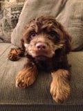 Mon bébé Bentley Images libres de droits