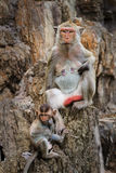 Mon and baby monkey. In Thailand Royalty Free Stock Photo