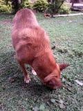 Mon beau chien maintenant qu'il semble plus grand image libre de droits