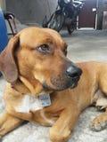 Mon bel I amour du chien mon doge Photographie stock libre de droits