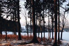 Mon bois Image libre de droits