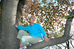 Mon branchement d'arbre Images stock