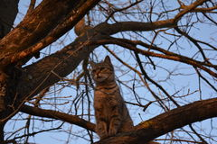 Mon chat ! Images libres de droits