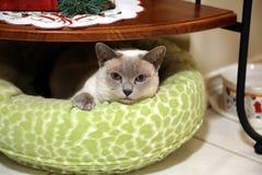 Mon chat Bianca Photo libre de droits