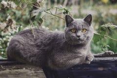 Mon chat de fovarite image stock