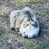 Mon chat doux Kika dans la journée de printemps chaude ! photos libres de droits