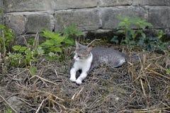 Mon chat gentil dans mon jardin images libres de droits