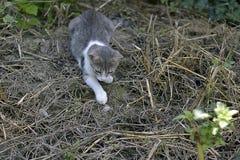 Mon chat gentil dans mon jardin photographie stock libre de droits