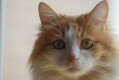 Mon chat me regardant image stock